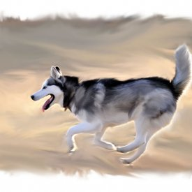 Siberian Husky Digital Painting